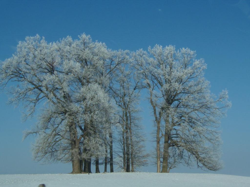 Eiszeit - Raureif auf winterlichen Bäumen