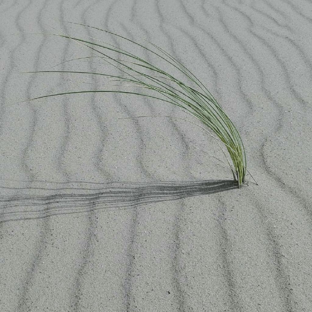 Leben im Sand... denn wer 2 Mal Ja sagt, darf auch Nein sagen